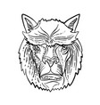 alpaca head etching black and white vector image