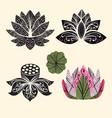 flower lotus Lotus flowers vector image vector image