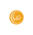 agriculture wheat logo template icon design app vector image