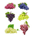 grapes realistic white and black grapes vector image vector image