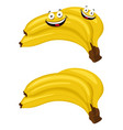banana bunches of fresh banana fruits isolated on vector image vector image