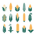 corn cobs icons for cereal or grain vector image vector image