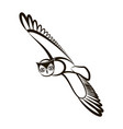 hand drawn owl opened wings black white plumage vector image