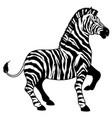 zebra on white vector image