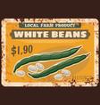 beans vegetables rusty metal plate farm market vector image vector image
