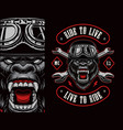 colorful biker patch with a gorilla biker vector image vector image