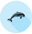 dolphin vector image