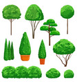 ornamental shrubs and trees on white background vector image vector image