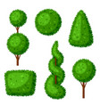 boxwood topiary garden plants set of decorative vector image vector image