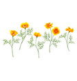 california poppy set vector image