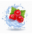 red currant isolated in water splash berry vector image vector image