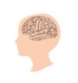 human brain child head anatomy vector image