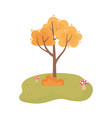 autumn tree bush mushrooms grass cartoon isolated vector image