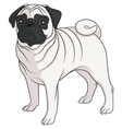 color image a pug vector image vector image