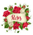 decorative ribbon with red roses beautiful vector image vector image