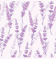 lavender floral purple seamless pattern vector image