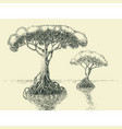 mangrove tree hand drawing tropical trees growing vector image vector image
