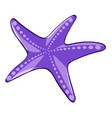 purple starfish on white background vector image