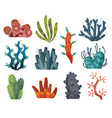 set watercolor seaweed and corals isolated on vector image