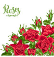 background with red roses beautiful realistic vector image vector image