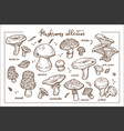 edible and inedible ripe forest mashrooms vector image
