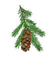 fir tree branch with cone isolated on white vector image vector image