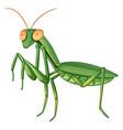 gpraying mantis on white background vector image
