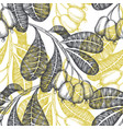hand drawn sketch cashew seamless pattern organic vector image