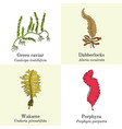 set edible and medicinal seaweeds vector image