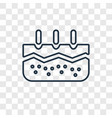 epidermis concept linear icon isolated on vector image