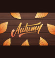 autumn autumn layout design with wooden vector image vector image