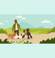 dogsitter man walking dogs in park male vector image