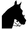 horse head with bridle silhouette vector image vector image