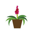icon in flat design hyacinth vector image vector image