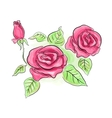 Sketch of pink roses in transparent colors vector image vector image