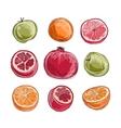 Set of fruits sketch for your design vector image