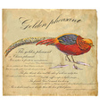 Golden Pheasant - An hand painted vector image