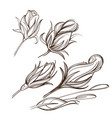 hand drawn set rose buds outline on white vector image vector image
