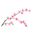 spring bloom tree branch with pink flowers vector image