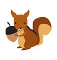 squirrel animal cartoon vector image