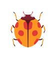 ladybug beetle insect bug top view flat vector image vector image