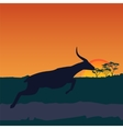 african savanna an evening landscape vector image