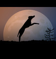 moon in the night silhouette black jumping dog vector image vector image