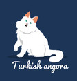 turkish angora cat with white fur on blue vector image vector image