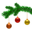 fir tree branch and christmas balls vector image