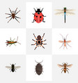 set of bug realistic symbols with black widow vector image