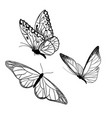 set three butterflies ink sketch hand drawn vector image
