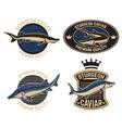 sturgeon caviar label template design element vector image