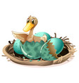 ugly duckling hatching egg in nest vector image