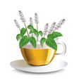 aromatic mint tea in a transparent cup vector image vector image